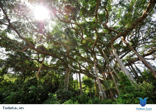 Sơn Trà – Thả ga hóng mát - Ảnh 5