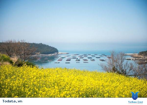 Thăm quan một nơi tuyệt vời tại Hàn Quốc - Ảnh 5