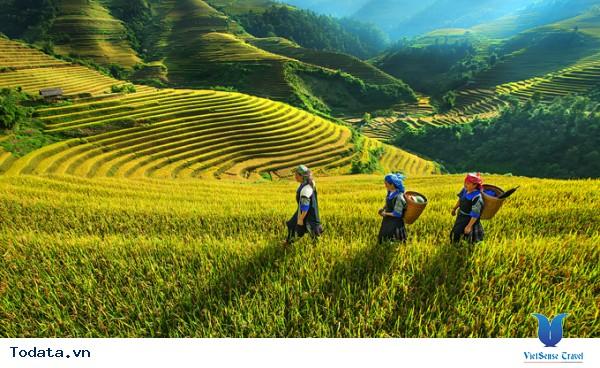 Vẻ Đẹp Trên Những Cung Đường Lúa Vàng Đông - Tây Bắc - Ảnh 2