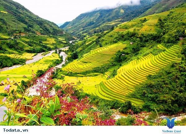 Vẻ Đẹp Trên Những Cung Đường Lúa Vàng Đông - Tây Bắc - Ảnh 3