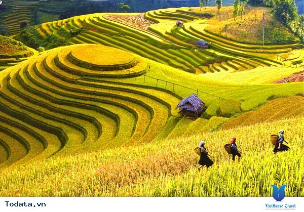 Vẻ Đẹp Trên Những Cung Đường Lúa Vàng Đông - Tây Bắc - Ảnh 4