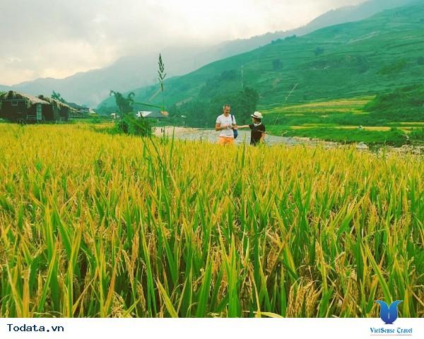 Vùng Núi Tây Bắc - Say Đắm Những Cung Đường Ngắm Mùa Lúa Vàng - Ảnh 5