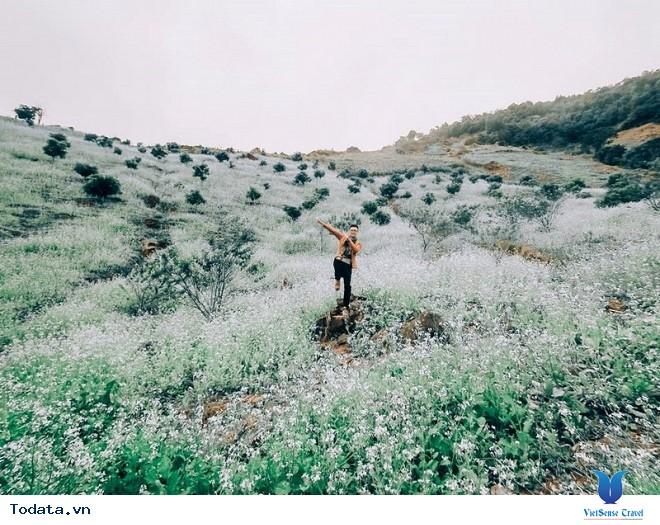 Xách Balo Lên Mộc Châu Ngắm Hoa Cải Trắng Tinh Khôi Trong Cái Lạnh Đầu Đông - Ảnh 5