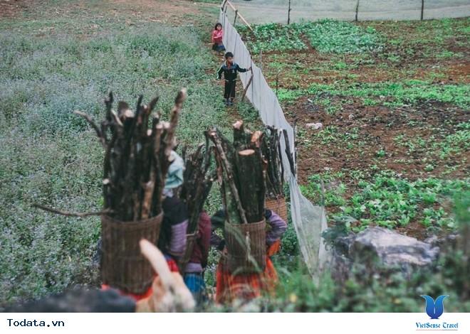 Xách Balo Lên Mộc Châu Ngắm Hoa Cải Trắng Tinh Khôi Trong Cái Lạnh Đầu Đông - Ảnh 7