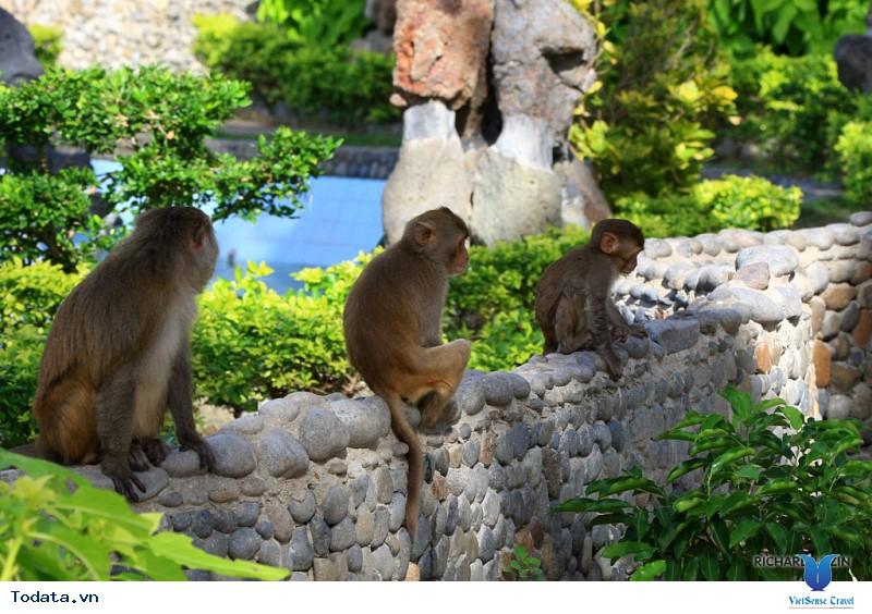 Hình Ảnh Đảo Khỉ Nha Trang - Ảnh 5