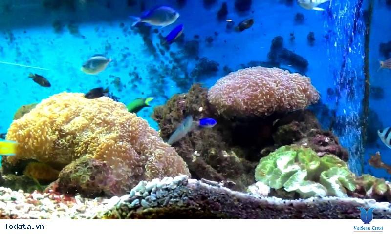 Hình Ảnh Viện Hải Dương Học Nha Trang - Ảnh 4