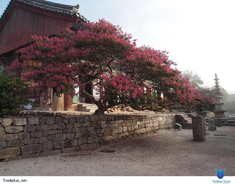 Jeollabuk-do Hàn Quốc cái tên mới nổi với nhiều điều thú vị - Ảnh 2