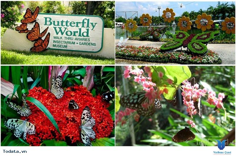 Lạc vào chốn thần tiên tại Vườn bướm Butterfly Garden ở Phuket - Ảnh 2