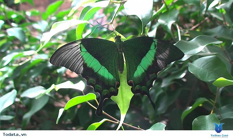 Lạc vào chốn thần tiên tại Vườn bướm Butterfly Garden ở Phuket - Ảnh 4