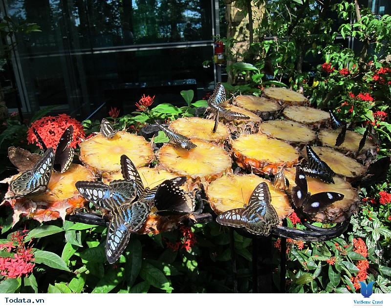 Lạc vào chốn thần tiên tại Vườn bướm Butterfly Garden ở Phuket - Ảnh 5
