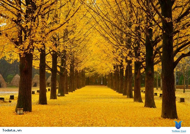 Những lý do bạn không nên bỏ qua Hàn Quốc trong mùa thu này - Ảnh 1