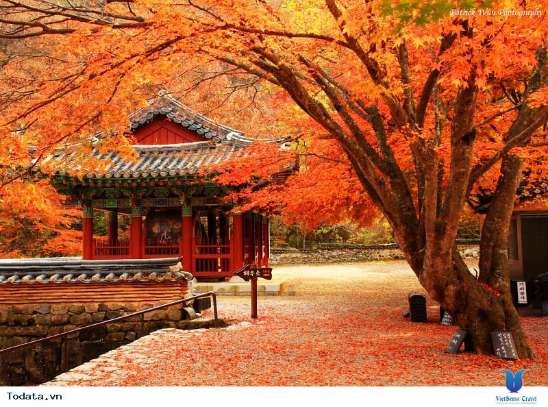 Vi vu Hàn Quốc ngắm mùa thu lá đỏ nhuộm màu trời - Ảnh 1