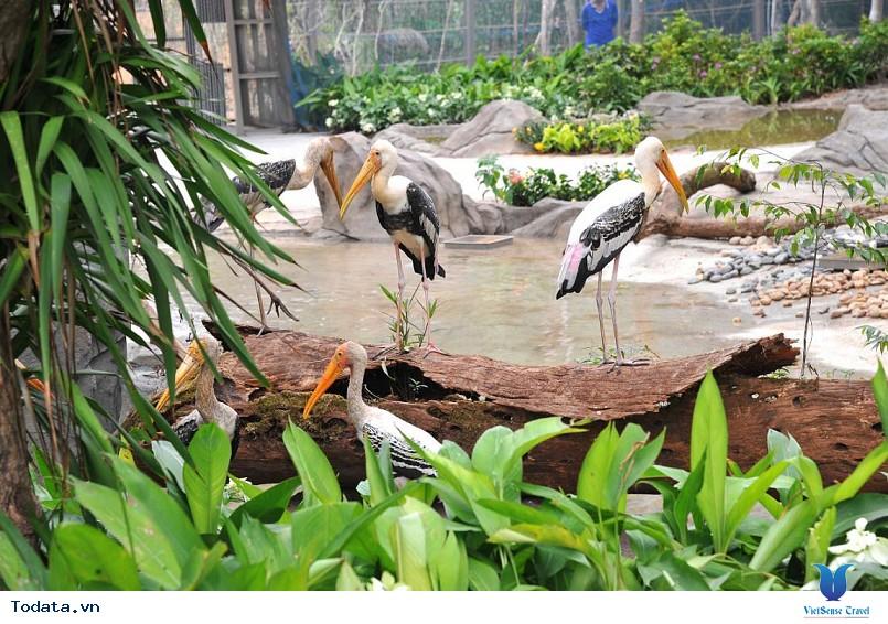 Đến Phú Quốc thăm vườn thú bán hoang dã đầu tiên tại Việt Nam - Ảnh 3