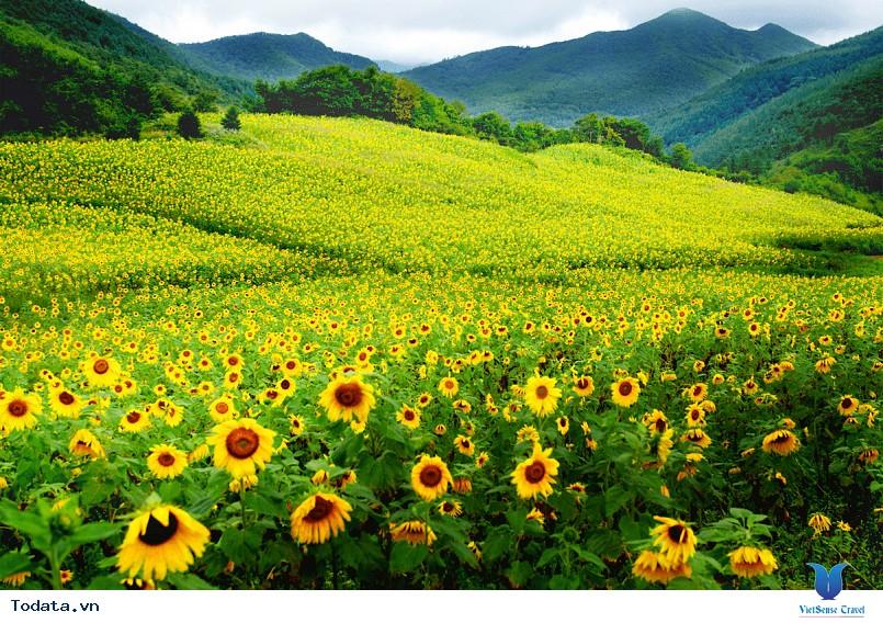 Hàn Quốc và những mùa hoa rực rỡ sắc màu - Ảnh 5