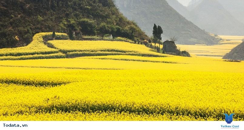 Hàn Quốc và những mùa hoa rực rỡ sắc màu - Ảnh 2