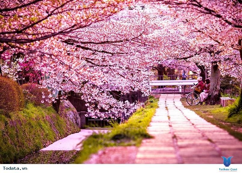 Hàn Quốc và những mùa hoa rực rỡ sắc màu - Ảnh 1