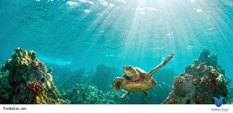 Hình Ảnh Đảo Hòn Mun Nha Trang - Ảnh 8