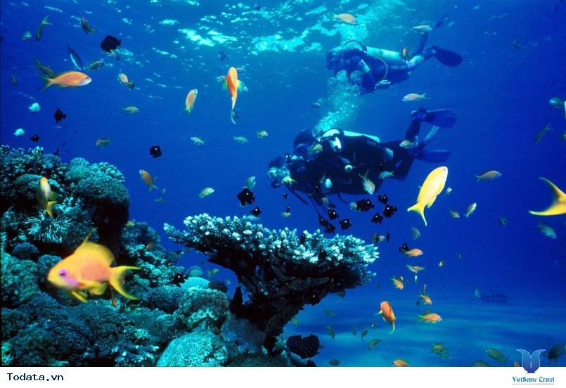 Hình Ảnh Đảo Hòn Mun Nha Trang - Ảnh 6