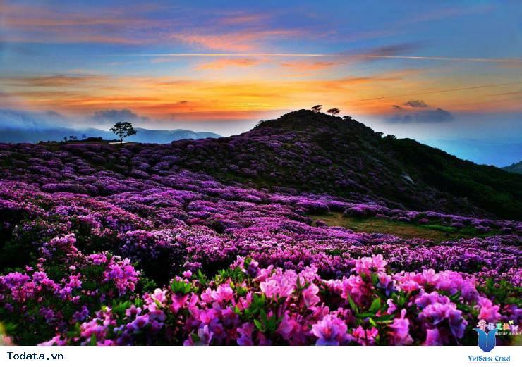 Mộng mơ khúc tình ca bốn mùa trên đảo Nami - Ảnh 7