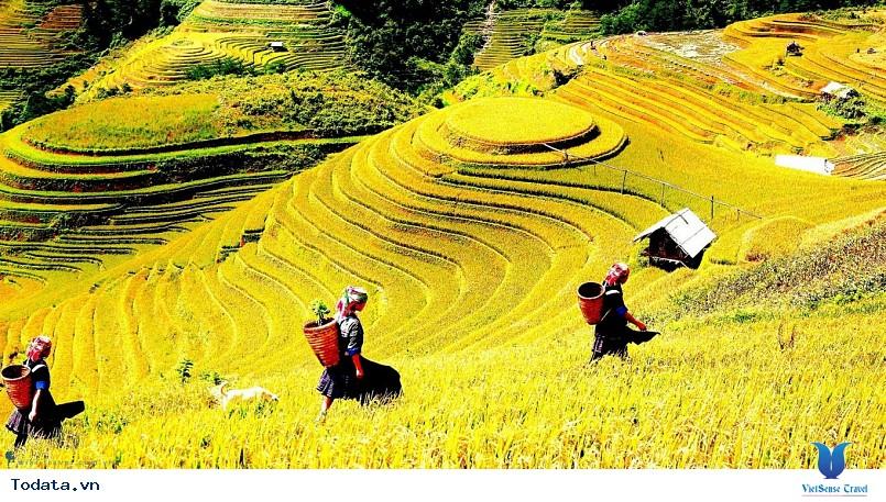 Vi vu cùng VietSense thưởng ngoạn Mù Cang Chải rực vàng trong mùa lúa chín - Ảnh 3