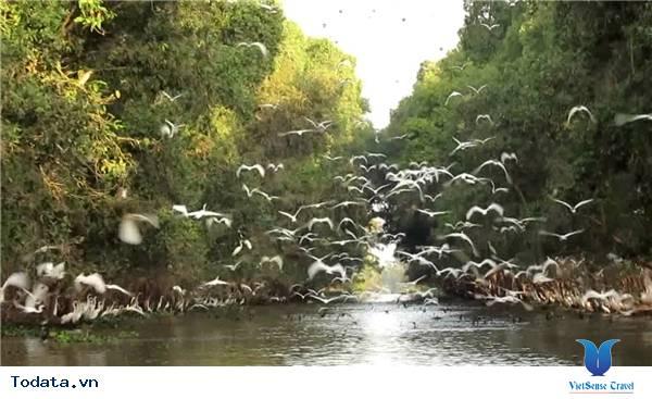 Vẻ Đẹp Vườn Quốc Gia Tràm Chim Lớn Nhất Việt Nam Hình Ảnh 1