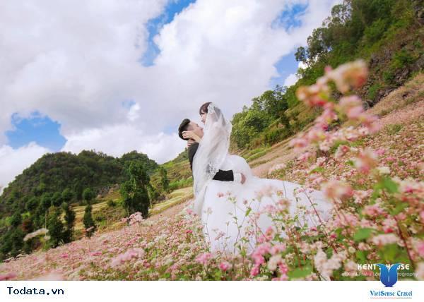 Những Điểm Chụp Ảnh Cưới Cùng Hoa Tam Giác Mạch Ở Hà Giang