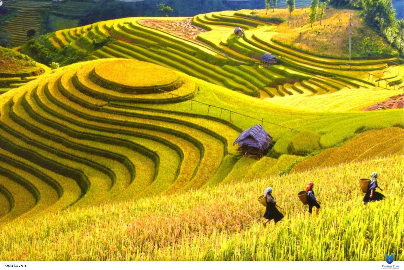 Vẻ Đẹp Trên Những Cung Đường Lúa Vàng Đông - Tây Bắc