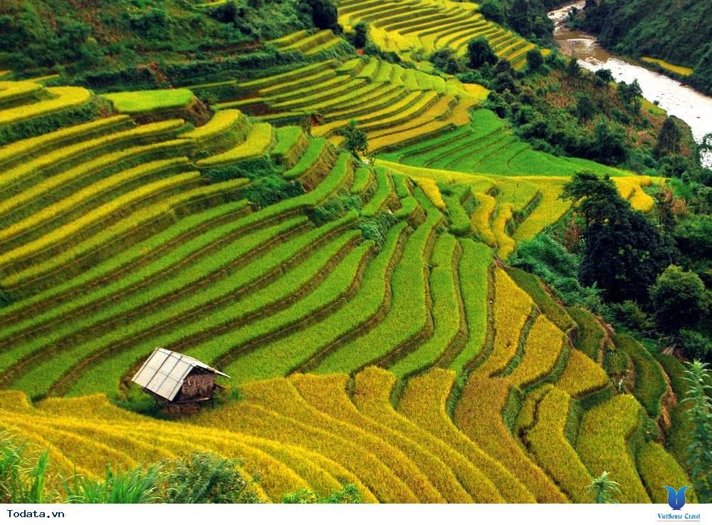 Vi vu cùng VietSense thưởng ngoạn Mù Cang Chải rực vàng trong mùa lúa chín