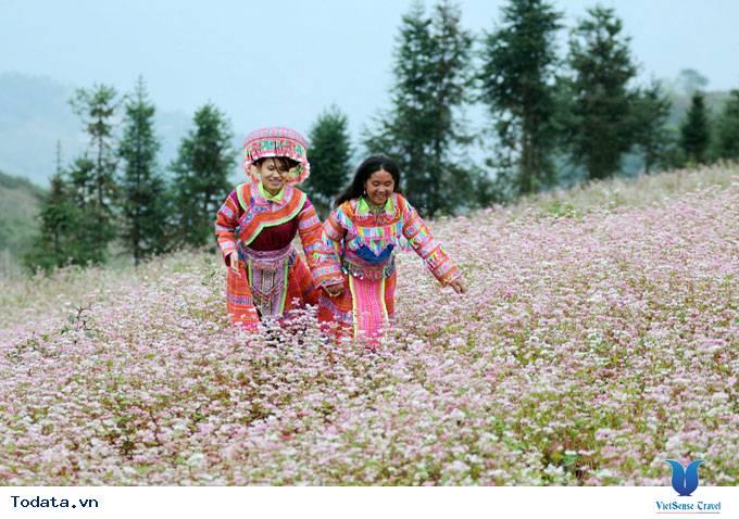 Cao nguyên đá- ngàn hoa khoe sắc - Ảnh 1
