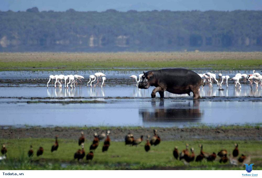 Công viên ngập mặn iSimangaliso - Ảnh 3