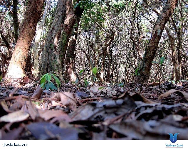 Dạo Bước Rừng Trâm Trên Đảo Quan Lạn - Ảnh 6