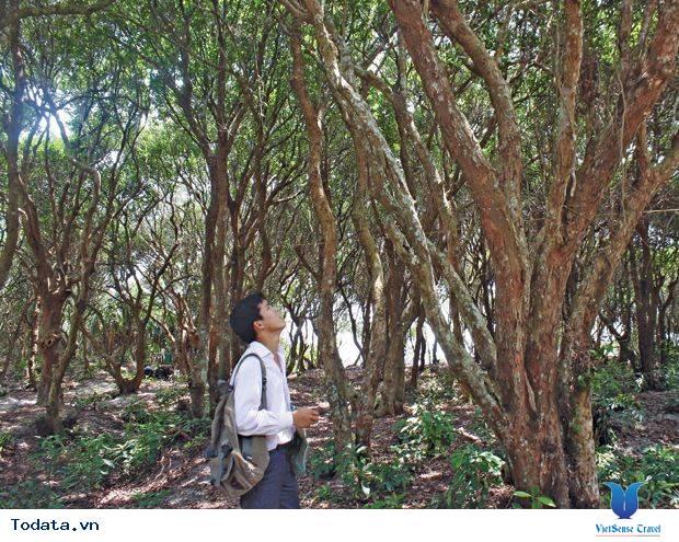 Dạo Bước Rừng Trâm Trên Đảo Quan Lạn - Ảnh 2