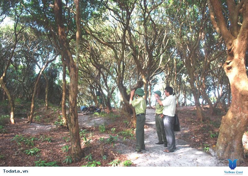 Dạo Bước Rừng Trâm Trên Đảo Quan Lạn - Ảnh 5