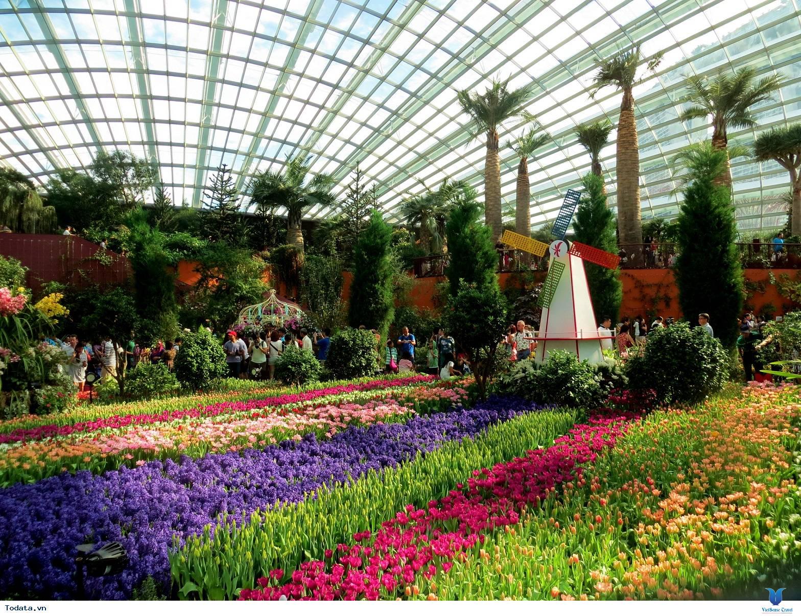 Gardens By The Bay- Khu Vườn Nhân Tạo Khổng Lồ Của Singapore - Ảnh 6