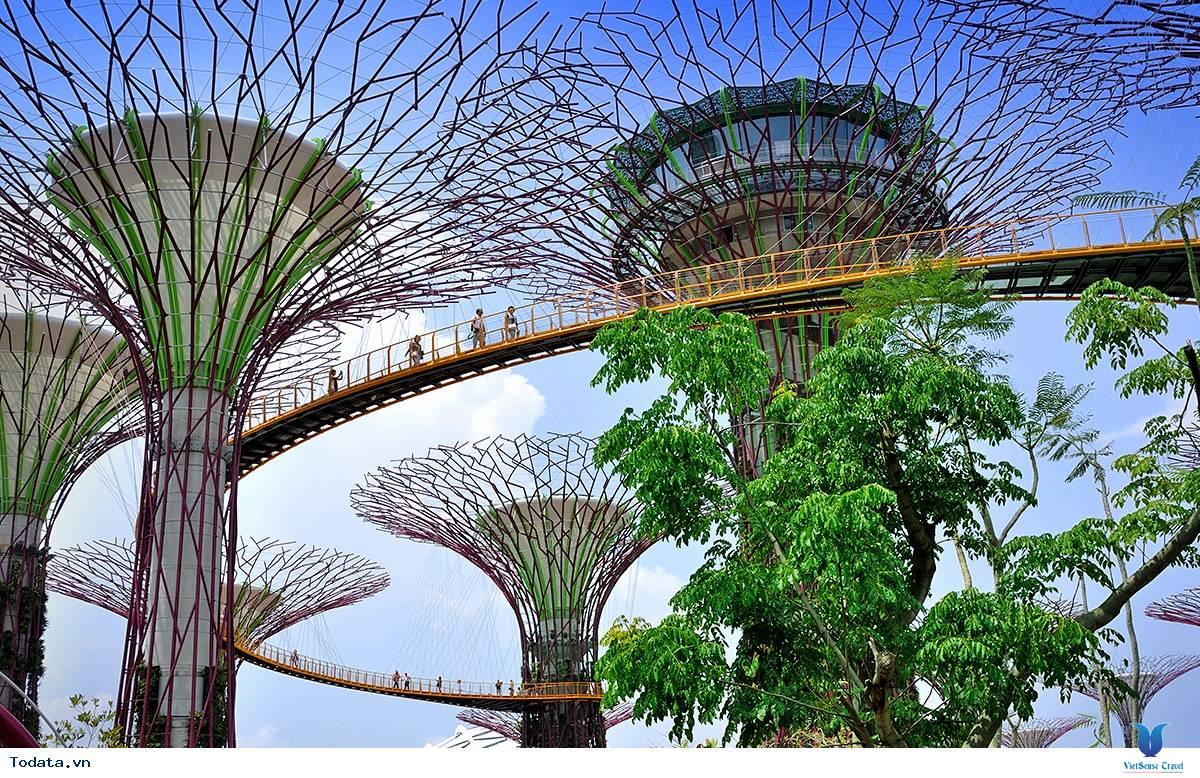 Gardens By The Bay- Khu Vườn Nhân Tạo Khổng Lồ Của Singapore - Ảnh 10
