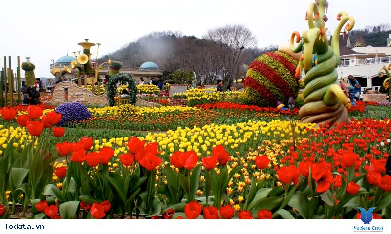 Hàn Quốc và những mùa hoa rực rỡ sắc màu - Ảnh 3