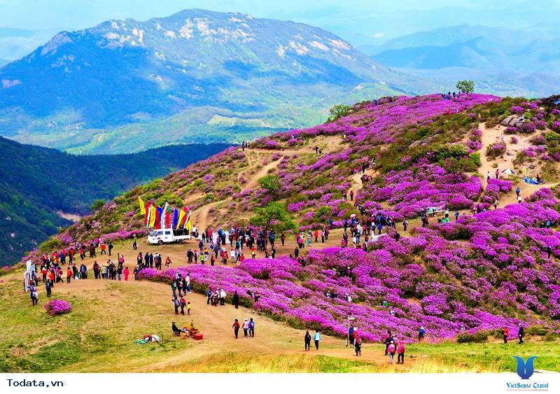 Hàn Quốc và những mùa hoa rực rỡ sắc màu - Ảnh 4