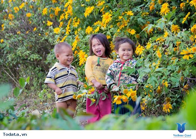 Hoa Cải Nở Trắng Đồi Mộc Châu Những Ngày Mùa Tháng 11 - Ảnh 8