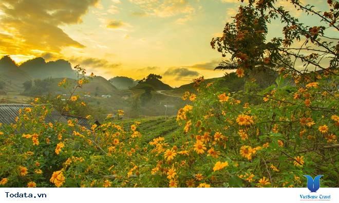 Hoa Cải Nở Trắng Đồi Mộc Châu Những Ngày Mùa Tháng 11 - Ảnh 4