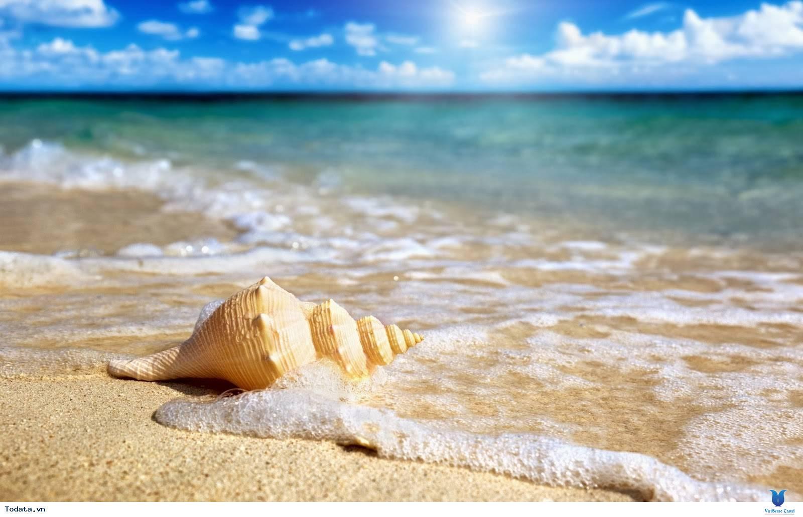 Khám Phá Bãi Sao- bãi biển đẹp nhất Việt Nam - Ảnh 8
