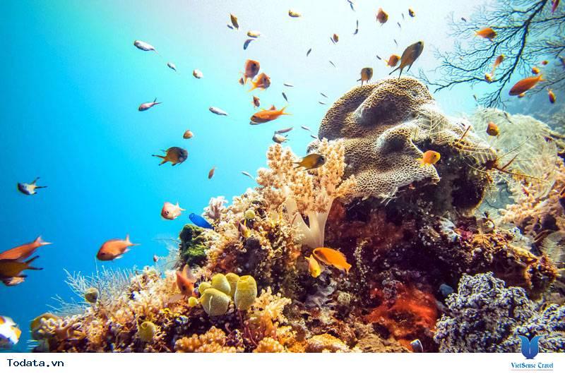 Khám phá khu rừng dưới lòng đại dương của Maldives - Ảnh 1