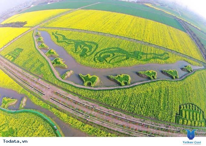 Lộng lẫy với thảm cải hoa vàng ở Trung Quốc - Ảnh 5