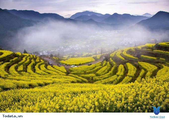 Lộng lẫy với thảm cải hoa vàng ở Trung Quốc - Ảnh 1