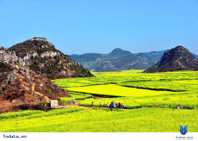 Lộng lẫy với thảm cải hoa vàng ở Trung Quốc - Ảnh 4