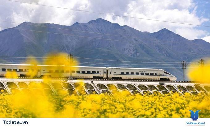 Lộng lẫy với thảm cải hoa vàng ở Trung Quốc - Ảnh 3