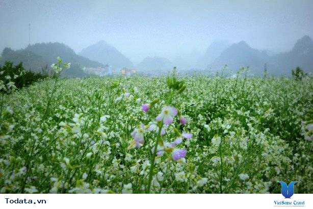 Du lịch Mộc Châu - Chốn bình yên sau những ngày vội vã - Ảnh 14