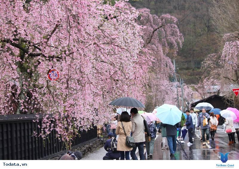 Ngắm hoa anh đào Nhật Bản ở đâu là lý tưởng nhất – Phần 1 - Ảnh 3