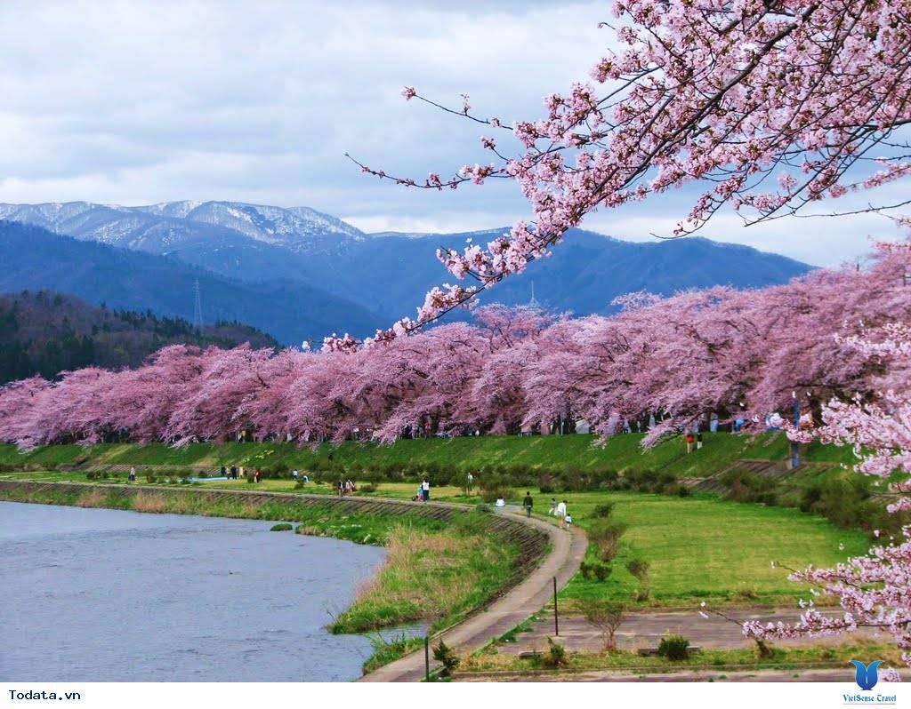 Ngắm hoa anh đào Nhật Bản ở đâu là lý tưởng nhất – Phần 1 - Ảnh 2