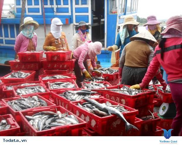 Rộn ràng mùa cá chuồn biển đảo Lý Sơn - Ảnh 3