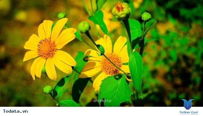Rức Sắc Màu Hoa Trên Những Nẻo Đường Phượt Mùa Thu - Ảnh 9